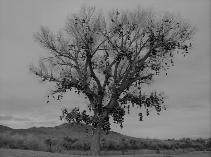 shoetree